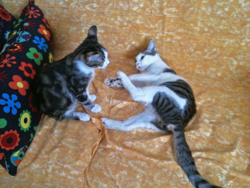 Lulù ed Ettore che fanno la lotta