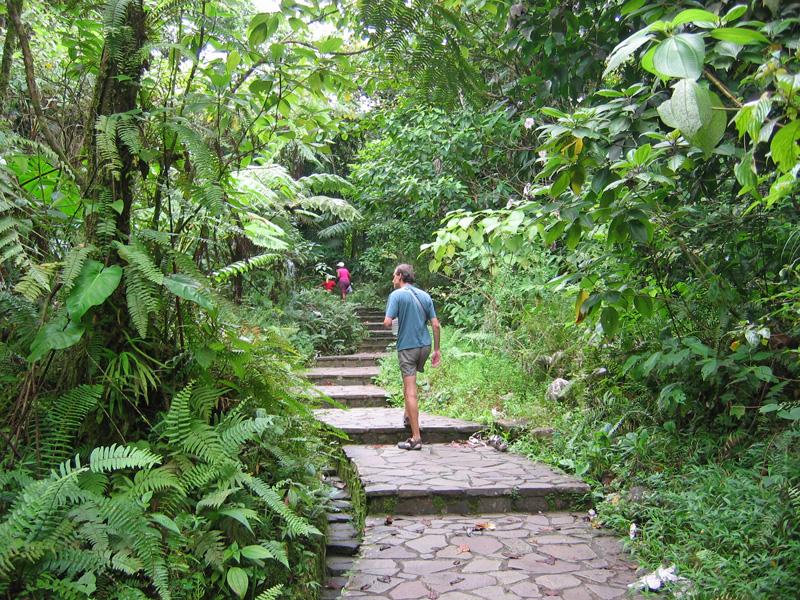 Guadalupa, sentieri ben tenuti per bellissime passeggiate nella foresta tropicale.Guadalupa, sentieri ben tenuti per bellissime passeggiate nella foresta tropicale.