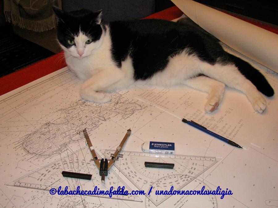 Il nostro gatto, anche lui studiava per la patente nautica!