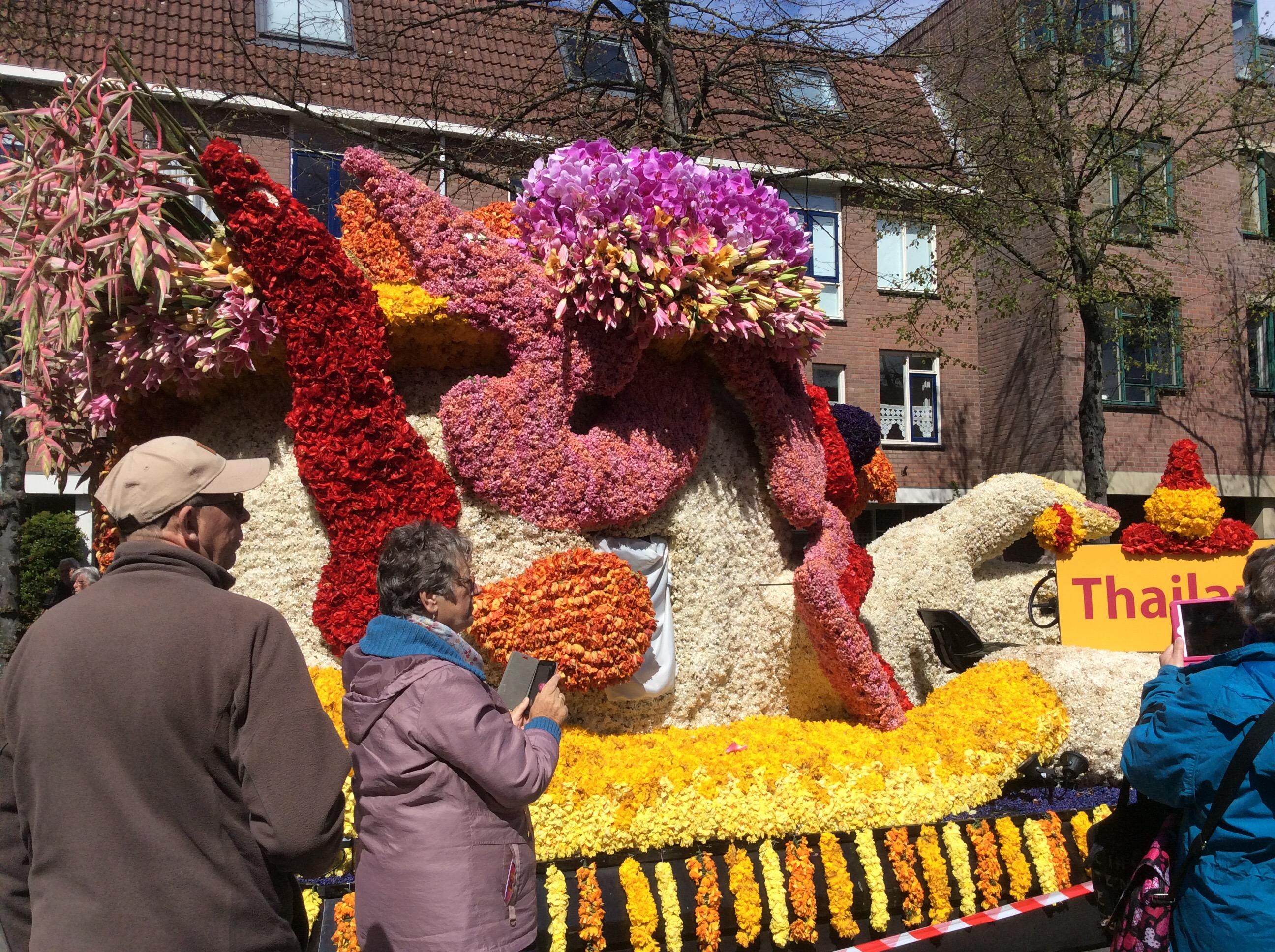 haarlem olanda carri fioriti