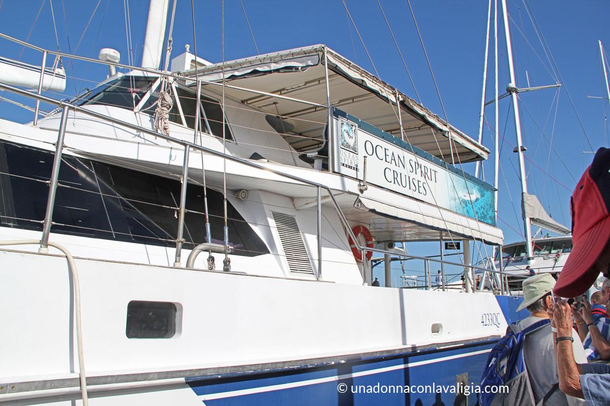 catamarano snorkeling grande barriera corallina